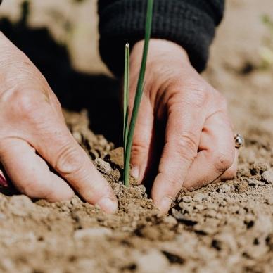 AGRICOLTURA: STANZIATI 15 MILIONI PER IL BONUS